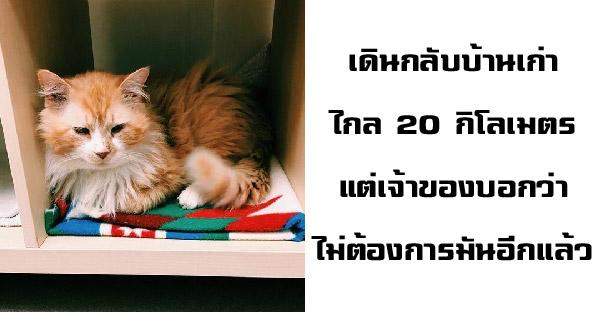 แมวเดินกลับบ้านเก่าไกล 20 กิโลเมตร แต่กลับต้องใจสลาย เพราะเจ้าของไม่ต้องการมันอีกแล้ว