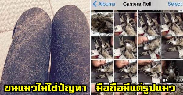 15 ข้อที่จะพิสูจน์ว่าคุณเป็นทาสแมวตัวจริงมากแค่ไหน