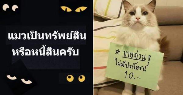 แมวคือทรัพย์สินหรือหนี้สิน และคำตอบก็เฮฮาสนั่นกลุ่มทาสแมว
