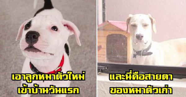 25 ภาพบ๊องๆของหมาตัวดี ที่ไม่ว่าจะดูกี่ที ก็ขำได้ทุกครั้ง