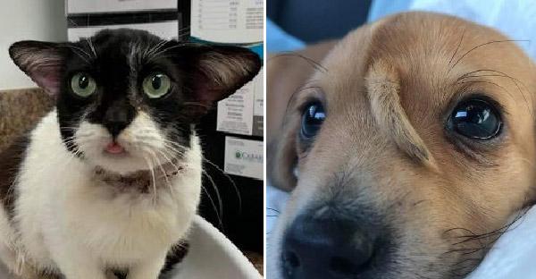 15 ความไม่ธรรมดาของหมาและแมว ที่ธรรมชาติสร้างสรรค์ได้อย่างน่าทึ่ง