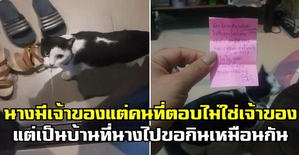 สาวเจอแมวมีปลอกคอมาขอข้าวกิน จึงฝากข้อความไป แต่กลับเจอคนที่ให้ข้าวกินเหมือนกันแทน