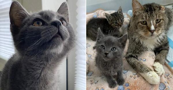 ลูกแมวจรจัดตัวน้อย โหยหาอ้อมกอดอันอบอุ่น จนได้มาเจอกับปู่แมวใจดี
