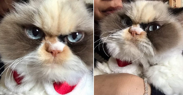 พบกับ Grumpy Cat ตัวใหม่ ที่หน้าตาดูโมโหกว่าตัวก่อนซะอีก