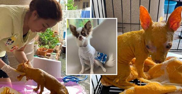สาวรักษาเรื้อนให้น้องหมา ด้วยขมิ้นผงกับน้ำมันมะพร้าวสกัดเย็น และอาการดีขึ้นอย่างเห็นได้ชัด