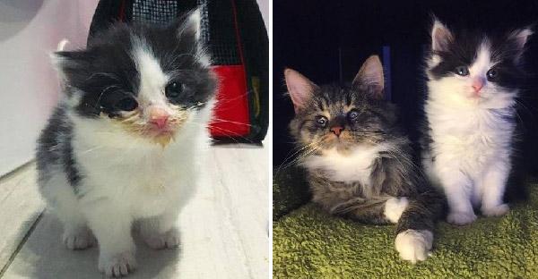 ลูกแมวตัวน้อยช่วยนำทางให้แมวตาบอดได้พบแสงสว่างในชีวิต หลังถูกช่วยมาจากข้างถนนพร้อมๆกัน