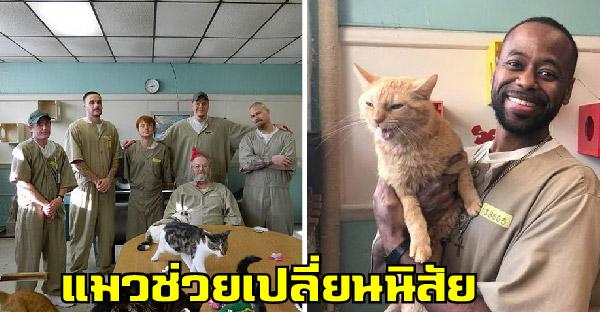 แมวไร้บ้านถูกส่งตัวให้นักโทษเลี้ยง และเปลี่ยนนิสัยพวกเขาให้อ่อนโยนขึ้นอย่างเห็นได้ชัด