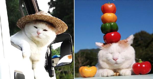 """""""ชิโร่จัง"""" เหมียวญี่ปุ่นที่อาศัยอยู่ในฟาร์มกับทาสแมวที่รู้ใจ น่ารักสุดๆจนโด่งดังบนโลกออนไลน์"""