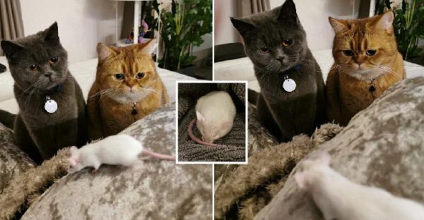 สาวทาสแมวช่วยหนูตัวน้อยถูกทิ้ง โดยมีสองพี่เลี้ยงมองตาโต รอต้อนรับด้วยความยินดี