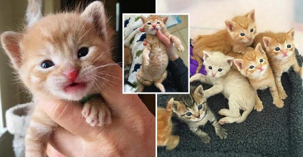 พนักงานอู่ซ่อมรถพบลูกแมวในยางรถยนต์ และช่วยชีวิตพวกมันได้ทันเวลา