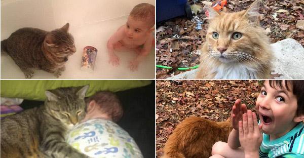 หนุ่มน้อยเสียเพื่อนแมวลายสลิดไปตั้งแต่ยังเด็ก และน้องตื่นเต้นมากเมื่อเจอแมวตัวใหม่ ปรากฎตัวที่หน้าประตู