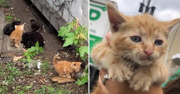 ลูกแมวอาศัยอยู่ลำพังใต้ตู้คอนเทนเนอร์ ก่อนคนงานจะช่วยไว้ก่อนที่จะสายเกินไป