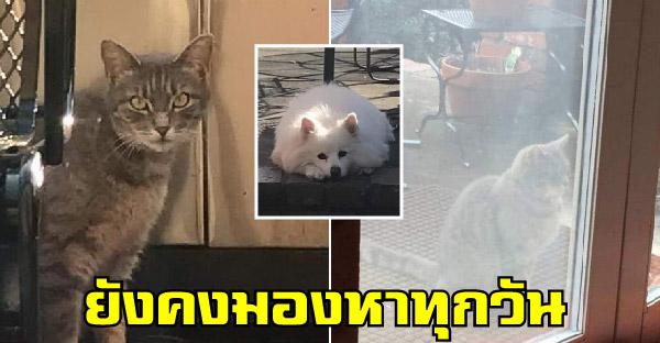 แมวข้างบ้านมาส่องที่หน้าต่างทุกวัน ด้วยความหวังจะได้เจอเพื่อนหมาที่จากไปแล้ว