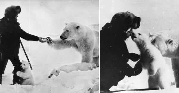 ทหารให้อาหารครอบครัวหมีขั้วโลกที่หิวโซ จนแม่หมีวางใจให้เล่นกับลูกๆได้