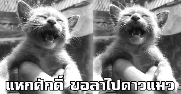 'แหกศักดิ์' ขอตัวลาไปดาวแมว หลังหลุดออกจากบ้าน โดยไม่ทราบสาเหตุที่แท้จริงของการจากไป