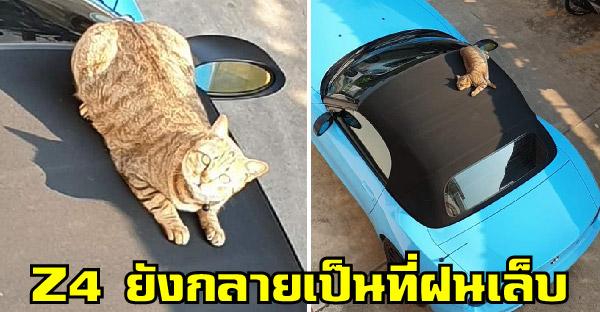 อ้วนแมวจรขาใหญ่ประจำหอพัก เก๋าถึงขนาดใช้หลังคาเปิดประทุน Z4 เป็นที่ฝนเล็บ