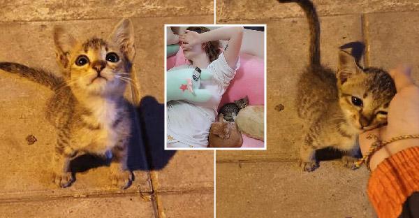 ลูกแมวน้อยถูกเลี้ยงเปิดข้างถนน ทาสหาบ้านให้แค่คืนเดียว นางแบบสาวเจสซี่ วาร์ด รับไปเลี้ยงแล้ว