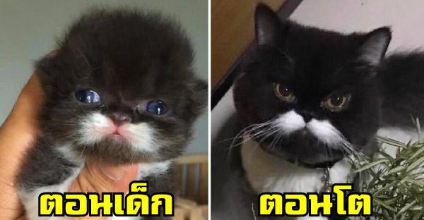 พบกับแมวหน้าหนวด 'ทรัมป์' เซเลปประจำกลุ่มทาสแมว มาพร้อมความเฮฮาที่เห็นแล้วต้องยิ้มตาม