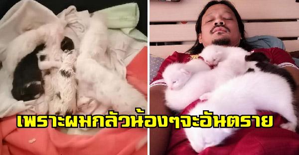 หนุ่มห่วงแมวจรท้องโตจึงพาเข้าห้อง แต่นางออกลูกมาเพียบ เขาจึงต้องกลายเป็นทาสแมวจำเป็น