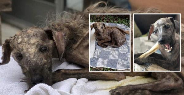 สาวร้องไห้ทันที หลังเจอสุนัขในสภาพย่ำแย่ และไม่มีใครสนใจอยู่ข้างถนน ก่อนเธอจะช่วยเปลี่ยนแปลงชีวิตมันไปตลอดกาล