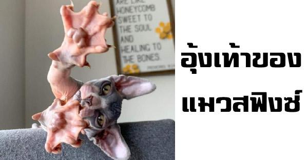 15 ภาพหมา-แมวกับความไม่ธรรมดา ที่ธรรมชาติสร้างสรรค์ได้อย่างน่าทึ่ง