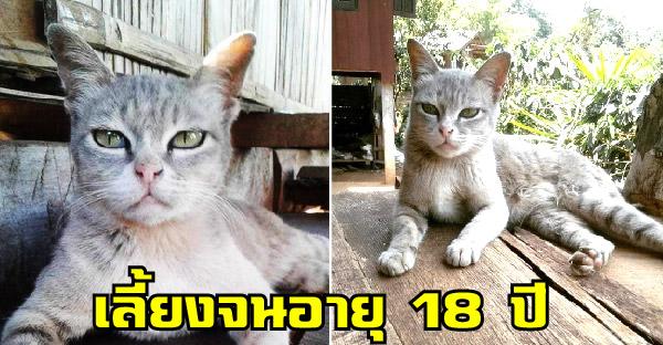 สาวเก็บแมวดอยมาเลี้ยงตั้งแต่ม.ต้น จนตอนนี้อายุยืนถึง 18 ปีแล้ว