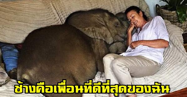 หญิงสาวช่วยชีวิตช้างน้อยตัวหนึ่ง และพวกเขากลายเป็นเพื่อนสนิทที่อยู่ด้วยกันตลอดเวลา