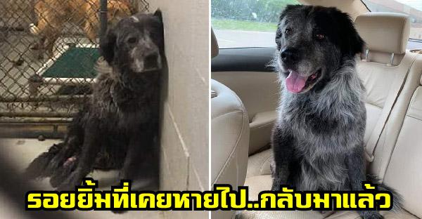 น้องหมาผ่านมรสุมจนหมดอาลัยในชีวิต แต่เมื่อหน่วยพิทักษ์สัตว์เข้าช่วยเหลือ มันก็หยุดยิ้มไม่ได้อีกเลย
