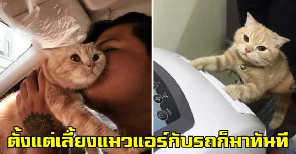 ชีวิตดีขึ้นหลังจากเลี้ยงแมว แต่ก่อนขออะไรแฟนก็ให้รอ ตอนนี้แมวร้อนก็ติดแอร์ ซื้อรถให้แมวนั่งสบายๆ