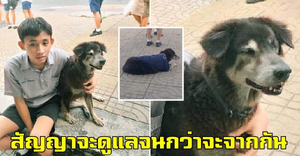 อดีตเคยมีเจ้าของ 'โด้' สุนัขข้างถนน ที่ได้คู่รักใจดีที่สัญญา จะดูแลไปจนกว่าถึงเวลาต้องจากกันไป