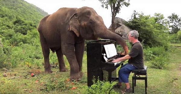 รู้จัก 'ลำดวน' ช้างตาบอดยอดนักเต้น ที่จะโยกย้ายส่ายตัวไปมาพร้อมกับเสียงเพลง