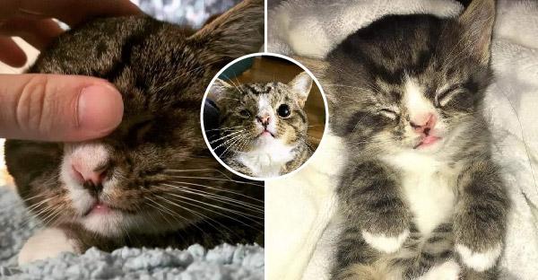 ลูกแมวที่ไม่สมบูรณ์พร้อม เลียมือขอความรักจากคนแปลกหน้า จนได้รับความเมตตาเป็นลูกบุญธรรม