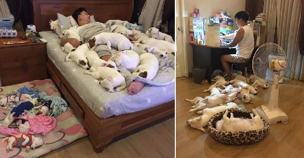ตอนแรกหนุ่มเลี้ยงหมาไม่กี่ตัวก็รู้สึกสนุกดี แต่พอเกือบยี่สิบก็ไม่รู้สึกอะไรอีกแล้ว