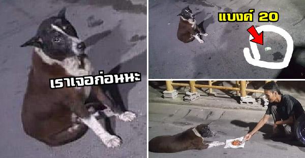 หนุ่มเจอเงินตกพื้น แต่มีหมานั่งเฝ้า จะเอาเองก็เกรงใจ จึงกำเงินไปซื้อไก่ทอดให้น้องกินแทน