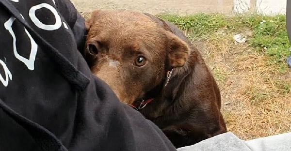 สุนัขจรจัดนั่งอยู่ที่เดิมทุกวัน ด้วยความหวังที่จะมีคนรับไปดูแลอีกซักครั้ง