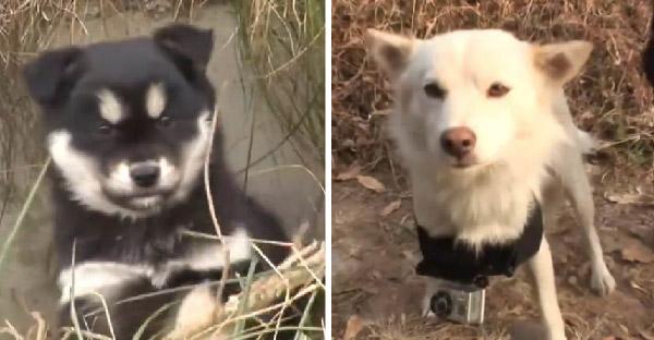 แม่หมาเศร้าหนักหลังเจ้าของเอาลูกทั้ง 6 ตัวไปให้เพื่อนบ้าน นยางจึงแอบคาบลูกตัวที่เจ็ดไปแอบไว้บนภูเขา