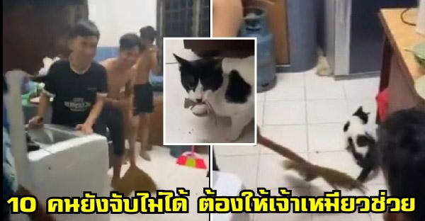 หนุ่มวัยรุ่นกว่า 10 คน เชียร์แมวไล่จับหนูในบ้าน หลังวงแตกไปรอบ และมันก็ทำสำเร็จด้วย