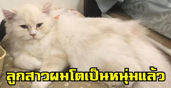 หนุ่มตั้งชื่อแมวว่า 'มะลิ' เพราะนึกว่าเป็นสาว แต่พออายุ 5 เดือน 'ปิกาจู้' โผล่มาทักทาย กลับตัวไม่ทันแล้ว