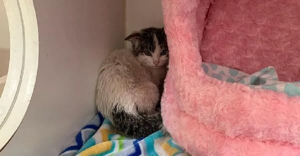 ลูกแมวขี้กลัวถูกช่วยจากข้างถนน และได้พบครอบครัวใหม่ ที่พร้อมดูแลมันไปตลอดชีวิต