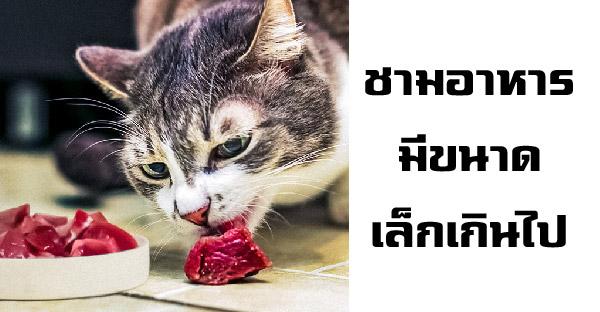 14 ข้อผิดพลาดที่ทาสแมวหลายคนทำโดยไม่ตั้งใจ