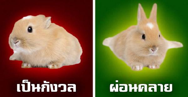 ภาษากายของสัตว์เลี้ยง 8 ชนิด ที่เจ้าของควรรู้เอาไว้