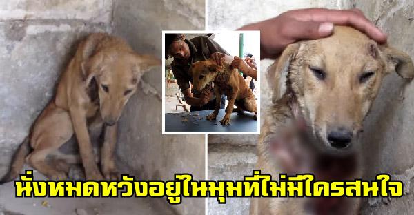 สุนัขจรจัดนั่งหมดหวังอยู่ในมุมมืด จนกู้ภัยสัตว์เข้าช่วยเหลือ และเปลี่ยนแปลงชีวิตมันไปตลอดกาล