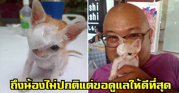 ครอบครัวรับลูกแมวไร้บ้าน 'ส้มซ่า' มาเลี้ยง ถึงน้องไม่ปกติ แต่ขอทำให้ดีที่สุด