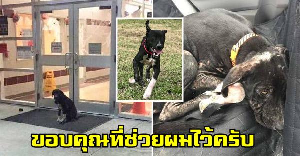 ครูอาสาช่วยชีวิตสุนัขจรจัดที่มานั่งหน้าโรงเรียนทุกเช้า และเปลี่ยนชีวิตมันไปน่าอัศจรรย์