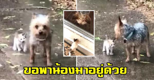 หมาตัวน้อยพาลูกแมวจรจัดกลับบ้าน ขณะกำลังเกิดพายุฝนกระหน่ำ
