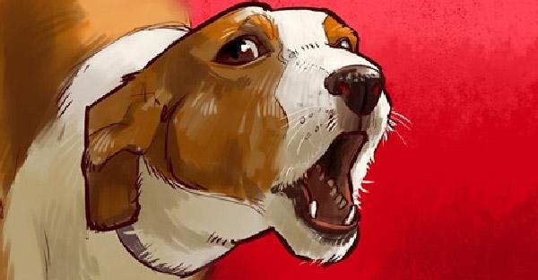8 เหตุผลที่สุนัขเห่า และทำไมเราไม่ควรรำคาญพวกมัน