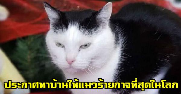 ศูนย์พักพิงสัตว์หาบ้านให้แมวร้ายกาจที่สุดในโลก ที่มีแต่วีรกรรมแสบๆ แต่คนแย่งกันรับเลี้ยงเพียบ