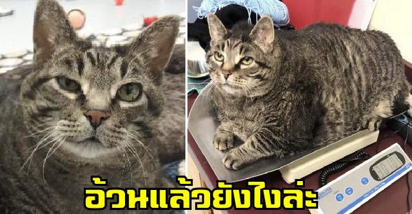 แมวอ้วนจ้ำม่ำบนที่ชั่งน้ำหนัก กลายเป็นไวรัลในโซเชียล และมีครอบครัวใหม่รับเลี้ยงอย่างรวดเร็ว