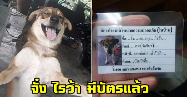'ไอจั๋ง' หมาบ้านแอ็บเป็นหมาจร มีบัตรประจำตัวแล้ว วิ่ง 100 เมตร แซงเวฟเข้าเส้นชัย