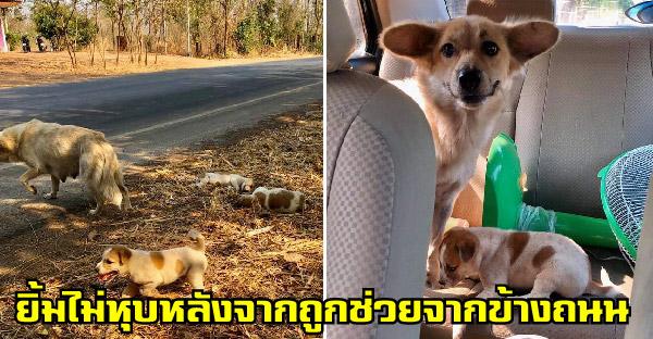 คนใจดีช่วยชีวิตแม่หมากับลูกน้อยอีกหนึ่ง หลังสูญเสียไปสองตัว พออุ้มขึ้นรถมาน้องนั่งยิ้มไม่หุบ